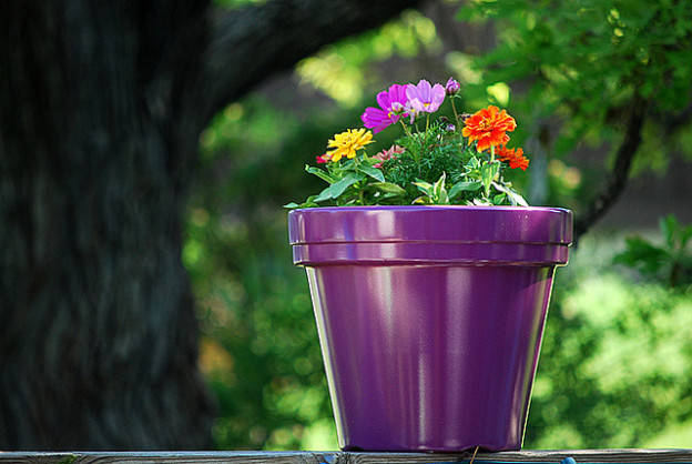Nelson Movers offer tips for Moving house plants